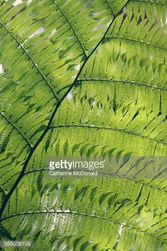 Bright green australian tree fern