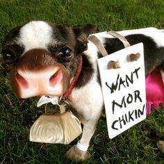 """DIY Chick Fil A Dog Costume - AHHAHAHAAA""  -  I am totally at a loss for words, maybe not....ASSHOLE!"