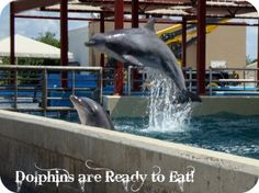 Tips for Sea World from Tip Junkie