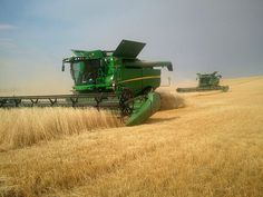 Wheat harvest 2011