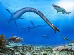 Albertonectes (plesiosaurio elasmosáurido del Cretácico de Canadá, 70mA) (Julius Csotonyi)