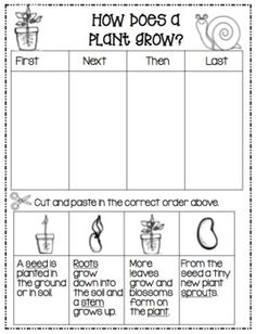 Field Day Games For Kids Discover Lets Write!How Does Your Garden Grow? Lets Write!How Does Your Garden Grow? Second Grade Science, First Grade Activities, 1st Grade Worksheets, Science Worksheets, Science Lessons, Science Activities, Montessori Science, Kindergarten Science, Plant Lessons