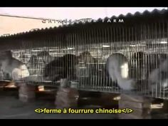 Earthlings Terriens VOSTFR - YouTube