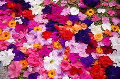 fiori.jpg (625×418)