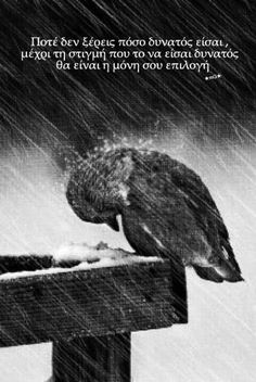 Black and White Photography - Resilience - extreme rain - quotes