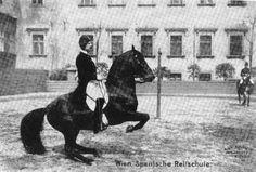Oberbereiter Meixner in the Levade