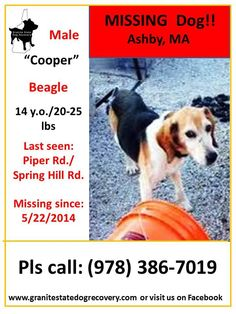 """Granite State Dog Recovery Liked · May 23 ·    Missing since 5/22/2014 - Ashby, MA - """"Cooper"""" is a 14 year old, deaf, male, tri-colored, beagle. He is thin - 20-25lbs (due to old age), wearing a collar with info and was last seen in the morning(5/22), on Piper Rd by Spring Hill Rd. Please share to get this little old man home. (djc)  Pls. Call: (978) 386-7019 — with Mary Letourneau. Sharon Boulanger"""