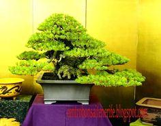 http://centrobonsaitenerife.blogspot.com/2016/02/mercadillo-kokufu-ten-parte-1.html