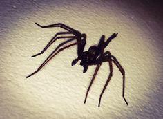 #Spider season is here with - @waspkilluk #bristol #pest #control