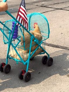 Pet Stroller: Perfect for dogs, cats, rabbits, even for chickens! - All About Gardens Chickens And Roosters, Pet Chickens, Chickens Backyard, Chicken Life, Chicken Humor, Building A Chicken Coop, Diy Chicken Coop, Keeping Chickens, Pet Care