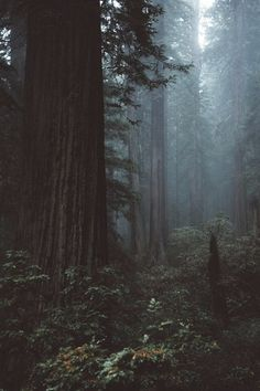 Our Beautiful World Beautiful World, Beautiful Places, Travel Photographie, All Nature, Amazing Nature, Dark Forest, Magical Forest, Belle Photo, The Great Outdoors