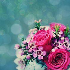 Hermosas flores y una increíble belleza natural