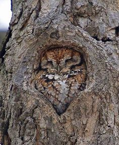 Do you see me??? #Owl #Owls #Cute #Animals #Birds #OwlsOfInstagram
