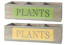 "2 Asst. Long ""Plants"" Boxes on OneKingsLane.com"