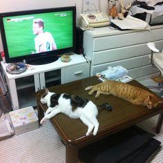 サッカー人気ないんだな… RT @tokoronosuke: 興味のなさすごい。 pic.twitter.com/5b3rZD646c