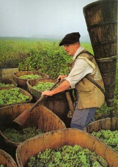 Making Alsace wine