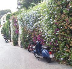 Flower wall near the beach