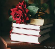 love roses are red Book Flowers, Diy Flowers, Pretty Flowers, Cute Disney Wallpaper, Colorful Wallpaper, Rose Flower Wallpaper, Single Red Rose, Every Rose, Bloom Blossom
