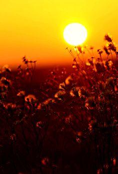 Romantikus képek a ráckevei Dunapartról a lenyugvó nap fényében Hungary, Celestial, Sunset, Outdoor, Outdoors, Sunsets, Outdoor Games, The Great Outdoors, The Sunset