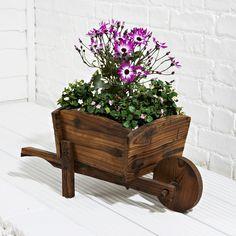 Coleridge - Wheelbarrow Planter