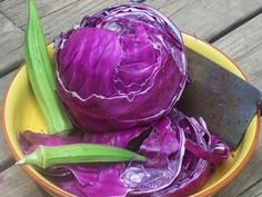 Round, in. reddish- purple heads weigh about 3 lbs. Adds a festive color to coleslaw. An excellent storage variety with resistance to cabbage yellows. Heads may sunburn in hot weather, so best for early spring and Fall crops. Autumn Garden, Spring Garden, Lawn And Garden, Fall Crops, Winter Crops, Garden Seeds, Planting Seeds, Garden Plants, Amazing Gardens