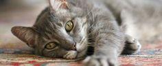 katten | wachtwoord vergeten | schrijf je in