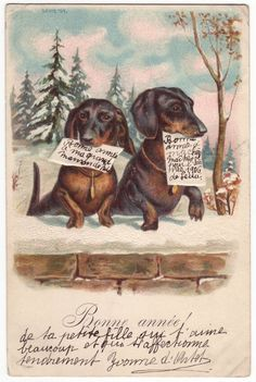 Vintage New Year's postcard with Dachshunds, 1905 via etsy.com
