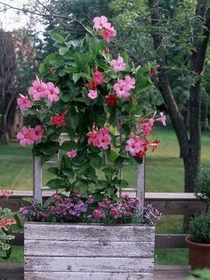 The dog days of summer can turn your gorgeous container gardens into a crispy mess. Try these plants that take the heat for color all season long.