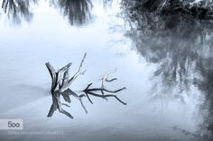 dead in the lake - Pinned by Mak Khalaf Abstract  by AgfaScala