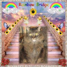 Rainbow Bridge Welcome