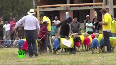 Colombia vence a Brasil en el 'mundial' de las ovejas
