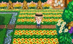 Sunflower field (click for qr codes)