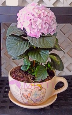 Frondosa Hortencia en maceta de taza vintage, sòlo en #FloreriaMiztli #Detalles #FelizLunes