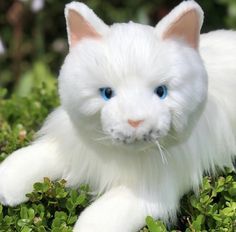 Auswella Plush®️White Floppy Cat #cats #kittens #cat #plush Kittens, Cats, Pet Toys, Plush, Animals, Cute Kittens, Gatos, Animales, Animaux