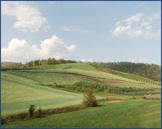 DEMOCRACY VINEYARDS - Virginia Wine - Nelson County