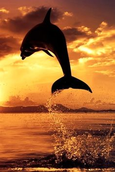 Leap into the sunset
