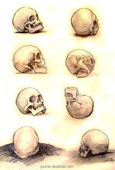 estudo crânios.