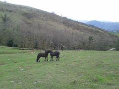 https://flic.kr/p/EKSoXH | Cariño equino en el monte Onddi.