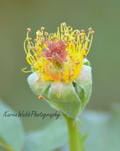 Photography Fairy Tales of the Garden by KarenWebbPhotography