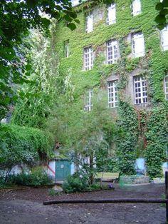 Zicht op groen doet deugd. Gebruik je vele schoolmuren en maak ze groen! Er zijn ook een heleboel klimplanten die zich niet vasthechten aan de muur, en waarbij woekeren of schade aan de muur dus geen risico is.