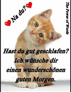good morning pictures with cats – Gb pictures Good Morning Funny, Good Morning Picture, Morning Pictures, Morning Humor, Morning Pics, Image Clipart, Montage Photo, Video Games For Kids, Dog Snacks