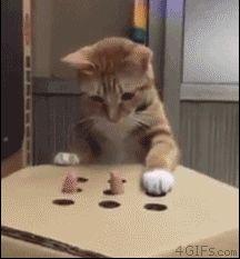 Whack-a-mole: cat version. Foto com animação #CatRoom