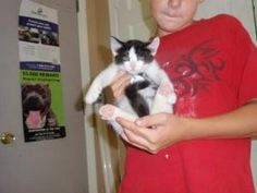 Scotty is an adoptable Domestic Short Hair-Black And White Cat in Dahlonega, GA. Scotty is a 3 month old little boy in need of his first real home. Scotty is a happy little kitten that wasn't exactly ...