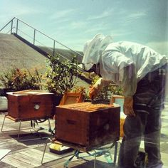 Detrás del cristal es mucho más sencillo ver el trabajo de nuestro apicultor en las colmenas situadas en el tejado de vente-privee.com ;-)  #honey #apicultura