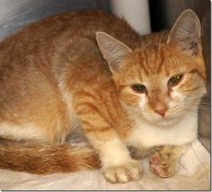 *KILLED>Crossposting to save lives: 4 ginger beauties on kill list for Friday at Cabarrus County shelter