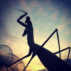 73 Best Praying Mantis Images Praying Mantis Beautiful