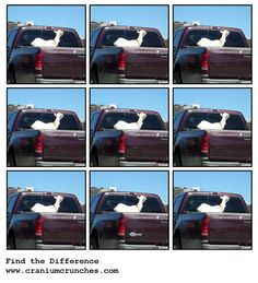 Looking for the unexpected...Goat in Truck?  Which one is different?  #puzzle