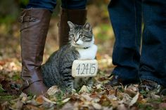 Include your cat in your engagement photos.