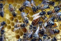 Bees Pesticides and the Activist Hive #farming #organic #farm #farmers #farmersmarket #agriculture #outdoors #food