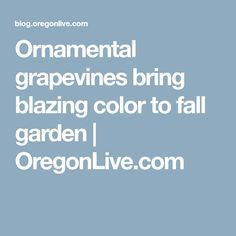 Ornamental grapevines bring blazing color to fall garden   OregonLive.com